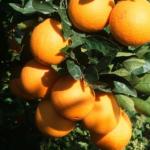 Orange Grove Management